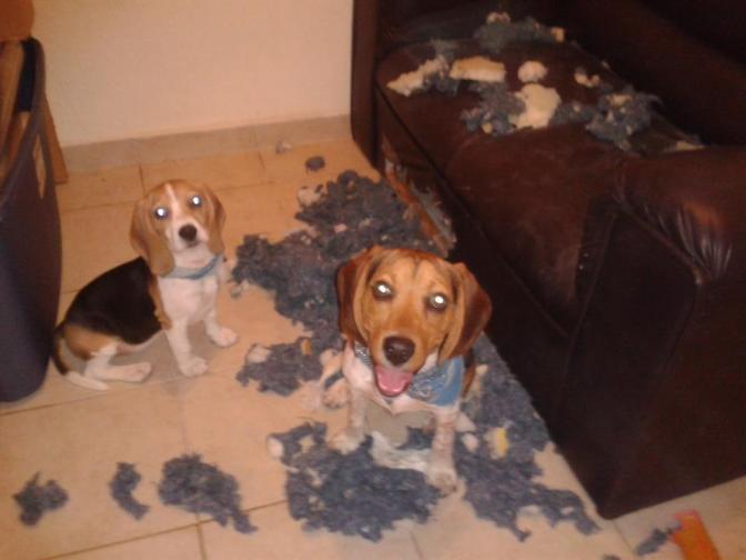Por qué mi perrhijo volvió a ser un perro.